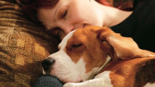 Per Dormire Bene Le Donne Preferiscono Avere Accanto Il Cane News