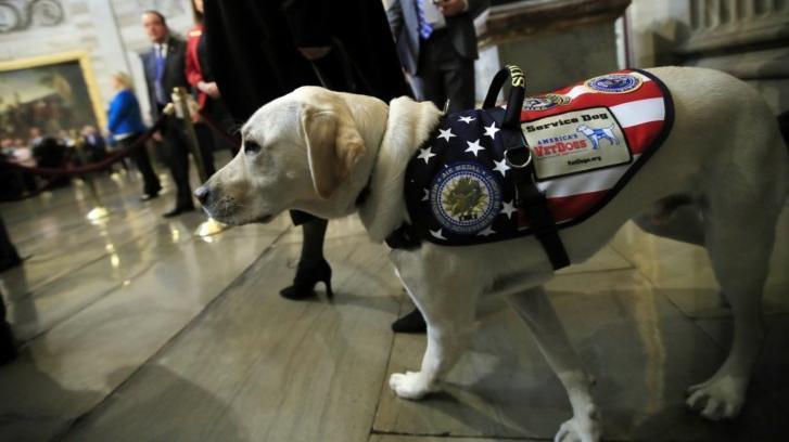 Sully Il Cane Dell'ex Presidente Bush Aiuterà I Veterani News