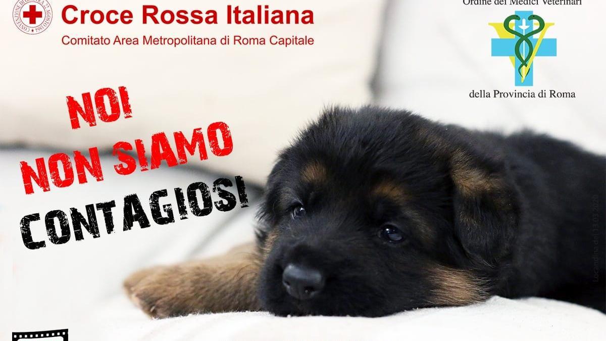 Domande Al Veterinario Cane veterinario e passeggiate con fido: vademecum dell'enpa   news